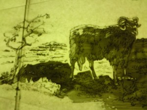 Mouton - heideschaap. brandschilderwerk